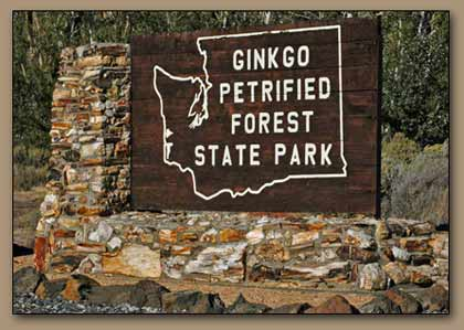 Ginkgo State Park.